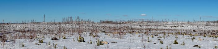 Panoramic view of the remains of a forest ravaged by a fire royalty free stock photography