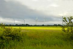 Panoramic view of a rice field with some windmills in the backgr. Panoramic view of a rice field with some energy producing windmills in the background royalty free stock photo