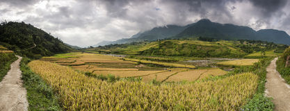 Panoramic view of rice field terraces. royalty free stock photography