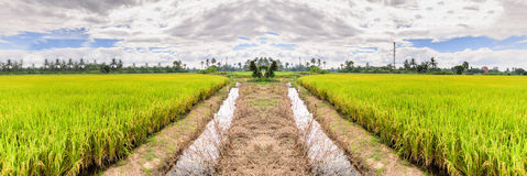 Panoramic view of rice field with waterway in Suphan Buri, Thailand Royalty Free Stock Photos