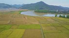 Panoramic view rice plantations against lake tropical plants. Beautiful panoramic view vast rice plantations against small lake hills and tropical plants in stock footage