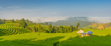Panoramic view of rice terrace in the morning Royalty Free Stock Images