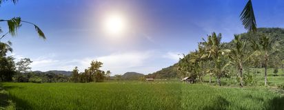 Panoramic view of rice terraces and mountains. Bali, Indonesia Royalty Free Stock Image