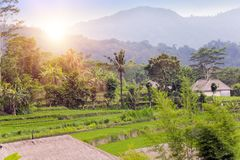 Panoramic view of rice terraces and mountains. Bali, Indonesia Stock Photography