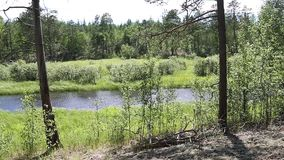 Panoramic view from right to left of a typical landscape for the Siberian taiga stock video footage