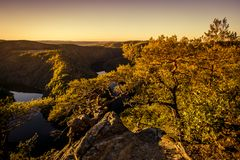 Twisted pine on a rock high above the canyon of the river in sun royalty free stock images