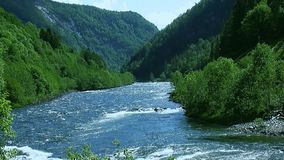 Panoramic view of river flow in mountains covered by green forest in summer sunny day. Nobody. Blue sky stock video