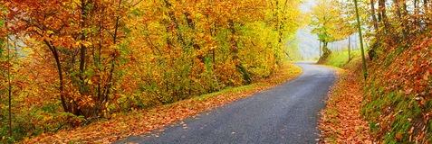 Panoramic view of road in autumn Stock Image