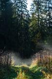 Panoramic view of of road in misty forest. Far horizon Royalty Free Stock Photography