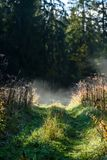 Panoramic view of of road in misty forest. Far horizon Royalty Free Stock Images