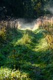Panoramic view of of road in misty forest. Far horizon Royalty Free Stock Image