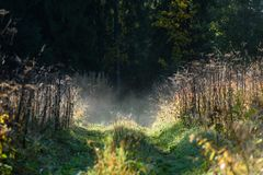 Panoramic view of of road in misty forest. Far horizon Royalty Free Stock Photos