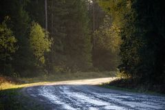 Panoramic view of of road in misty forest. Far horizon Stock Image