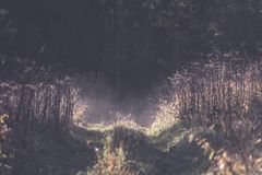 Panoramic view of of road in misty forest - vintage retro effect. Panoramic view of of road in misty forest. far horizon. - vintage retro effect Royalty Free Stock Image