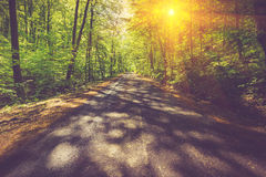 Panoramic view of the road through the mountain forest. Royalty Free Stock Photos