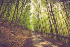 Panoramic view of the road through the mountain forest. Royalty Free Stock Images