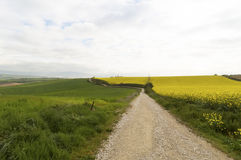 Panoramic view with Road to Santiago de Compostela, Navarre Royalty Free Stock Image