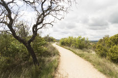 Panoramic view with Road to Santiago de Compostela, Navarre Stock Photography