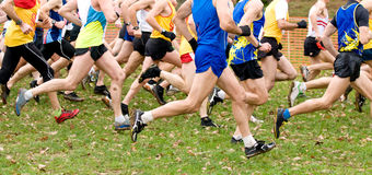 Panoramic view of runners. At cross country Stock Photography