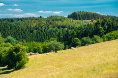 Panoramic View Of Rural Landscape In Germany Royalty Free Stock Photos