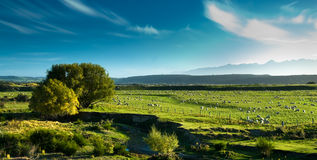 Panoramic view of rural scenery. Fiordland, new zealand Royalty Free Stock Photography