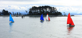 Panoramic View of Sailing Regatta, Nelson Royalty Free Stock Photo