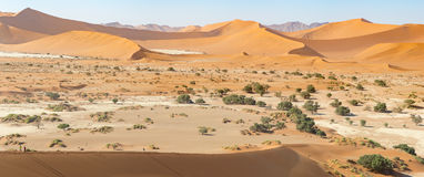 Panoramic view of sand-dunes in the Sossusvlei Nature Reserve in Namibia. These reddish dunes at the main `vlei` pan are massive Royalty Free Stock Images