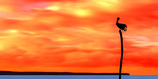 Panoramic view of sea and sky and a pelican silhouette Trinidad and Tobago at dusk Royalty Free Stock Photo