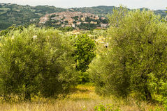 Panoramic view of Seggiano, in Tuscany Stock Image