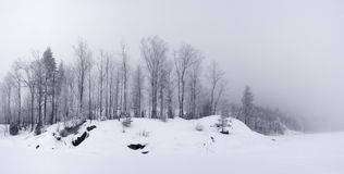 Panoramic view of shore of forest lake in winter Royalty Free Stock Images