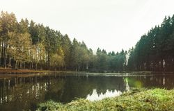 Panoramic view of a small lake in the forest royalty free stock images
