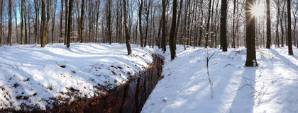 Panoramic view of snow covered forest royalty free stock images
