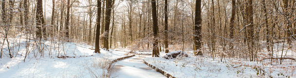 Panoramic view of snow covered forest stock photos
