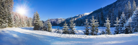 Panoramic view of snow covered trees Stock Photography