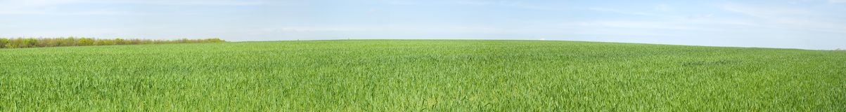 Panoramic view of spring meadow Royalty Free Stock Photo