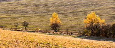Panoramic view of sunset in farmland with colorful trees Royalty Free Stock Photo