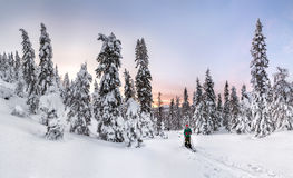 Panoramic view of sunset in the snowy forest, with one skier on the ski run royalty free stock photos