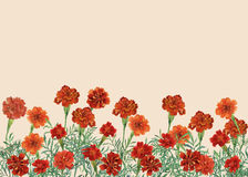 Panoramic view of Tagetes patula, the French marigold. royalty free illustration