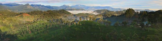Panorama of tea plantations Haputale, Sri Lanka royalty free stock photos