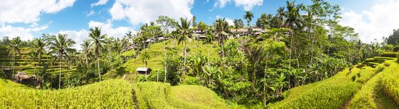 Panoramic view of Tegallalang Rice Terraces, Ubud, Bali, Indonesia. Beautiful green rice fields, natural background. Travel stock photos