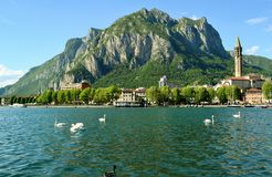 Panoramic view to the city of Lecco and lake Como with swans swimming. Royalty Free Stock Photo