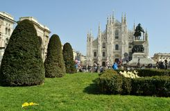 Panoramic view to flowerbed and mimosa flowers, Duomo and king Vittorio Emanuele monument. Royalty Free Stock Photo