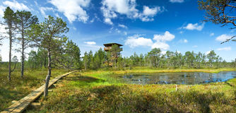 Panoramic view to Viru bogs royalty free stock photography