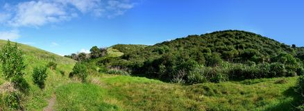 Panoramic view of tree covered hills. On Motutapu Island near Auckland grass in the front and native bushland in the background Stock Images
