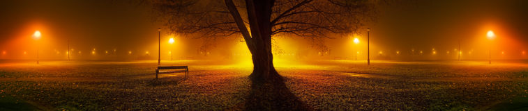Panoramic view of trees on a foggy night in park Royalty Free Stock Image