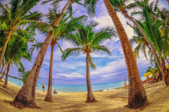 Panoramic view of tropical beach with coconut palm trees Stock Image
