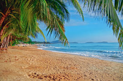 Panoramic view of tropical beach with coconut palm trees Stock Photos