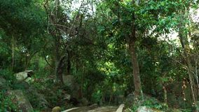 Panoramic view tropical trees and green plants in rainforest and stony staircase. Stony steps in tropical forest. Tourist footpath. Pathway in jungle with stock video footage