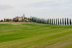 Panoramic view of tuscan landscape with green fields and rows of cypress trees, Tuscany, Italy stock image
