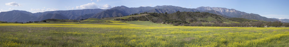 Panoramic view of Upper Ojai in spring featuring yellow mustard, California, USA Royalty Free Stock Images